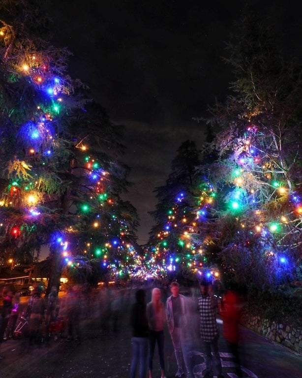 Christmas Tree Lane Lighting Ceremony in 2017